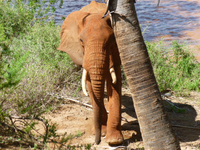 outside a tent in Galdessa - Elephant