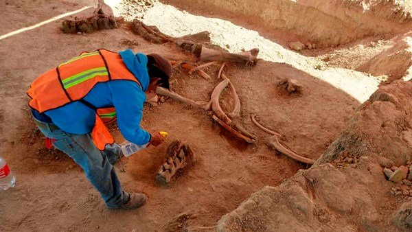 Mammoth found By archaeologists in Mexico city