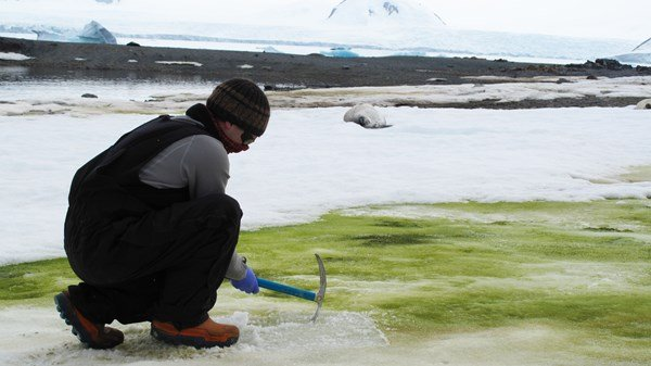 Antarctica experiencing algae blooms and climate change