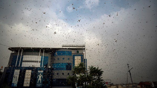 Locusts and climate change a problem for India
