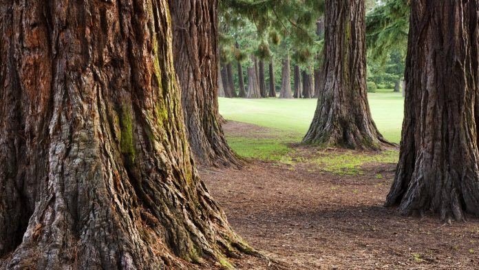 Sequoia; Climate Change