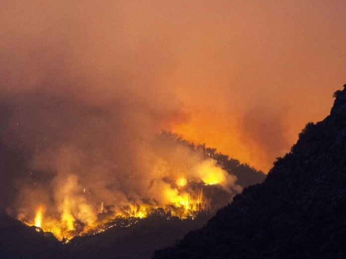 Fire in Sequoias; wildfire